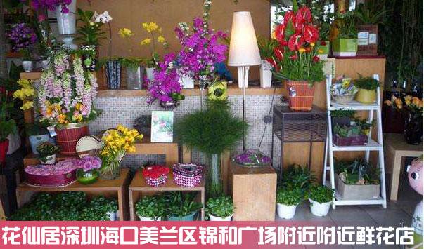 海口美兰区锦和广场附近鲜花店